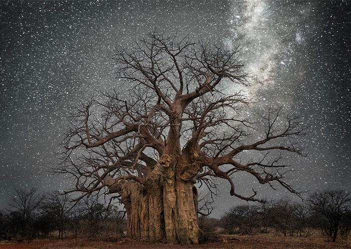 قدیمی ترین درختان جهان تذهیب شده با نور ستارگان!!