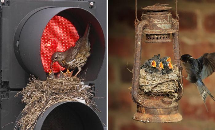 ۱۸+ لانه های غیر معمول پرندگان در مکانهای عجیب