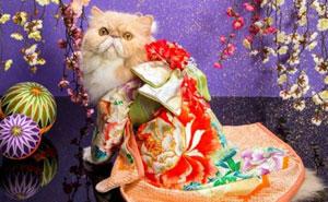 تصاویری از گربه ها در کیمونوی ژاپنی
