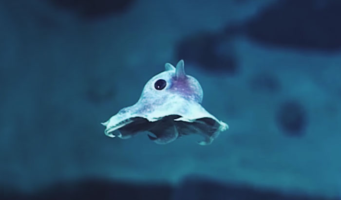 deep-sea-creatures-new-species-okeanos-explorer-coverimage