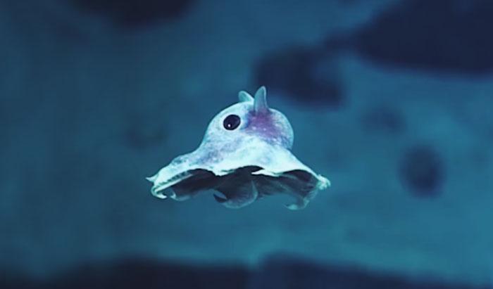 موجودات دریایی هرگز دیده نشده و عجیب: ۲۰،۰۰۰ فوت زیر دریا