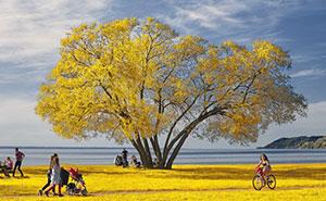تصاویری زیبا از درخت بروکلی در گذر زمان