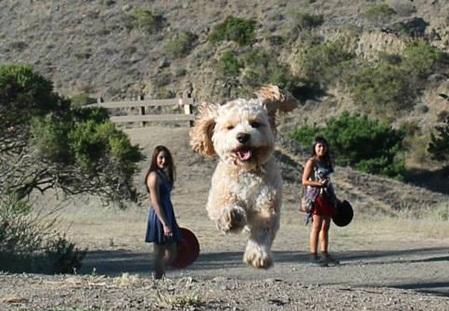 ۱۶+ عکس های به موقع: تبدیل سگ به موجود غول پیکر