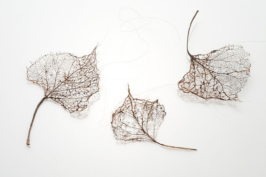 I-make-leaves-out-of-human-hair2__880