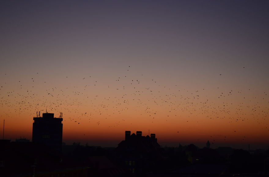 I-photograph-the-sunset-everyday-from-the-same-spot-Here-are-3-years-of-amazing-sunsets20__880