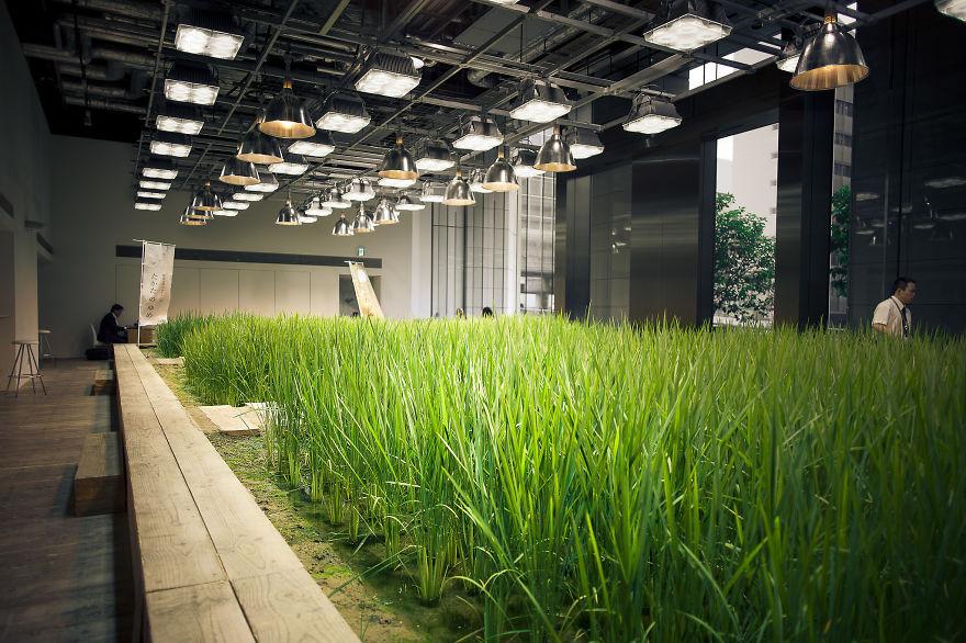 Japan-Secret-Urban-Farming-in-the-heart-of-tokyo3__880