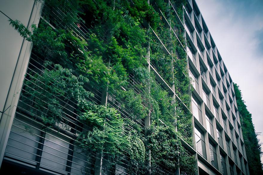راز کشاورزی شهری در توکیو