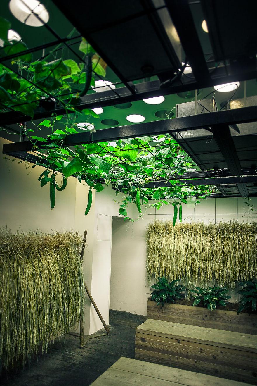 Japan-Secret-Urban-Farming-in-the-heart-of-tokyo__880