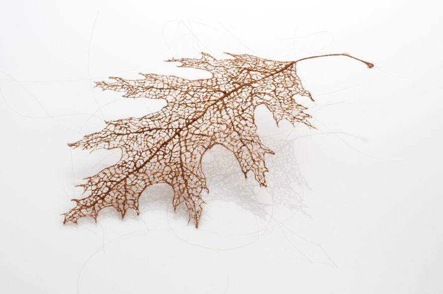 برگ های ساخته شده با موی انسان