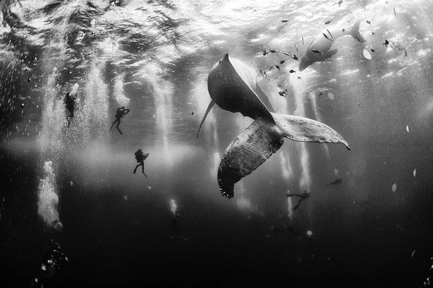 برندگان مسابقه عکاسی National Geographic در سال ۲۰۱۵