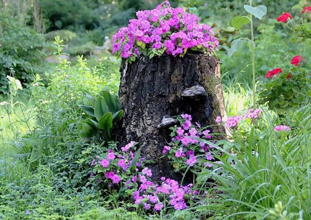 تبدیل کنده های درختان قدیمی به گلدان های زیبا
