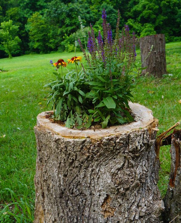 tree-stump-flower-garden-13__605