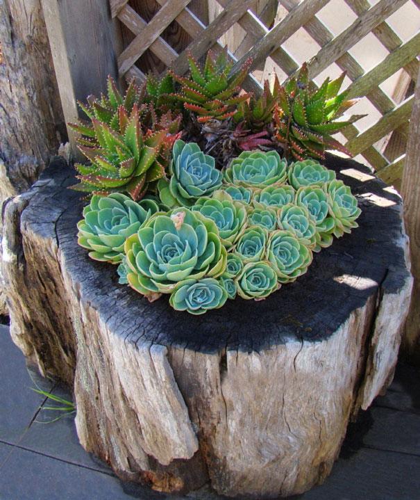 tree-stump-flower-garden-18__605