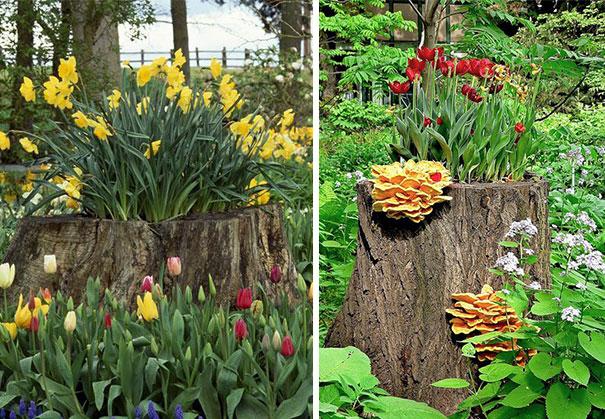 tree-stump-flower-garden-20__605