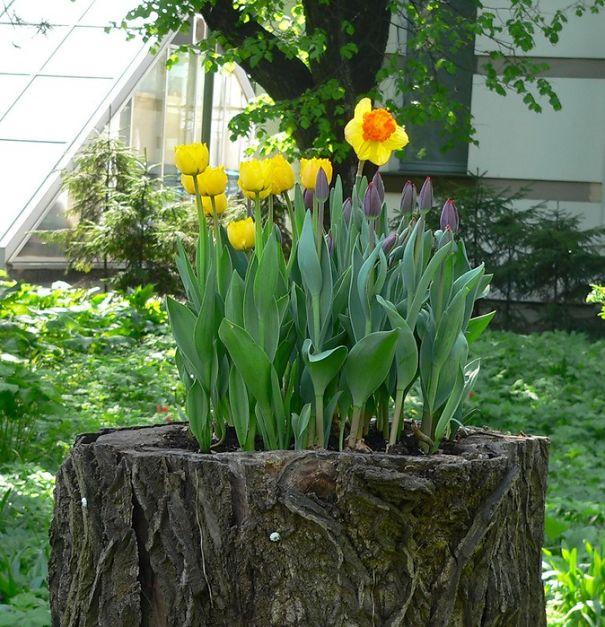 tree-stump-flower-garden-23__605