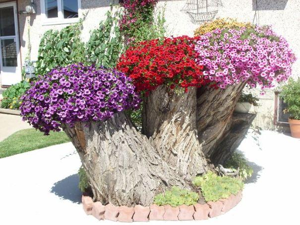 tree-stump-flower-garden-25__605