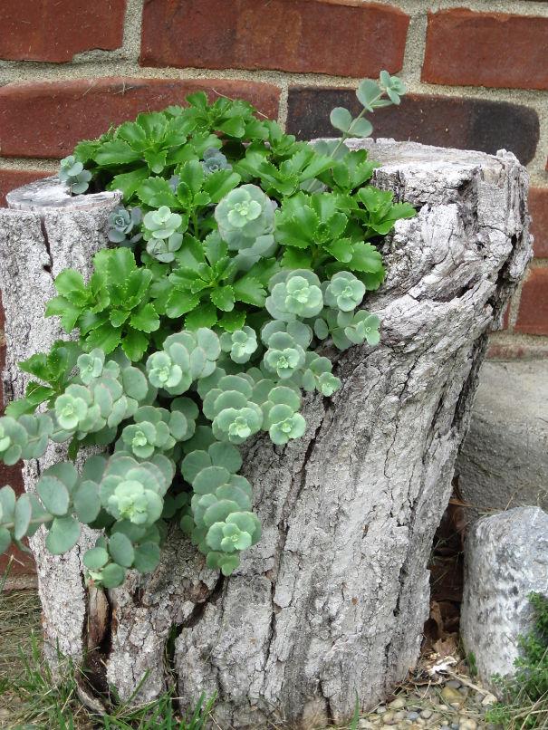 tree-stump-flower-garden-26__605
