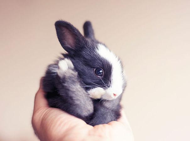 ۲۰ مورد از بامزه ترین خرگوش هایی که تاکنون دیده اید