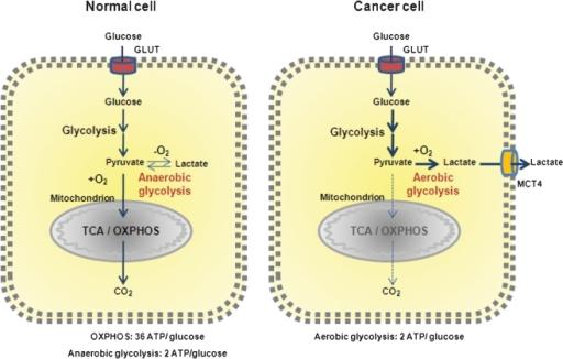 دخالت کلی میتوکندریها در تومورزایی