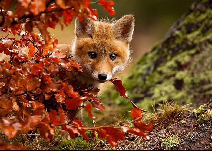 ۱۵+ حیوان در حال لذت بردن از پاییزسحرانگیز