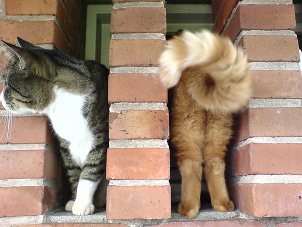 سری تصاویر به موقع جذاب و دیدنی از گربه ها