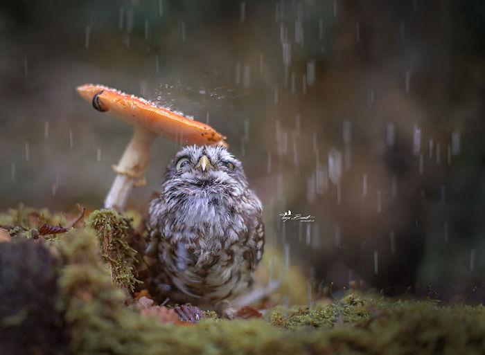 جغد، این پرنده اسرارآمیز (تصویری)
