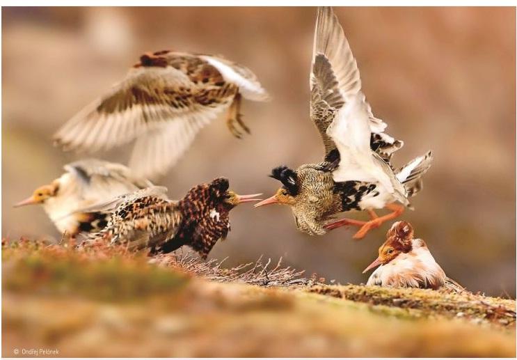 برگزیدگان مسابقهی سالانهی عکاس حیاتوحش ۲۰۱۵