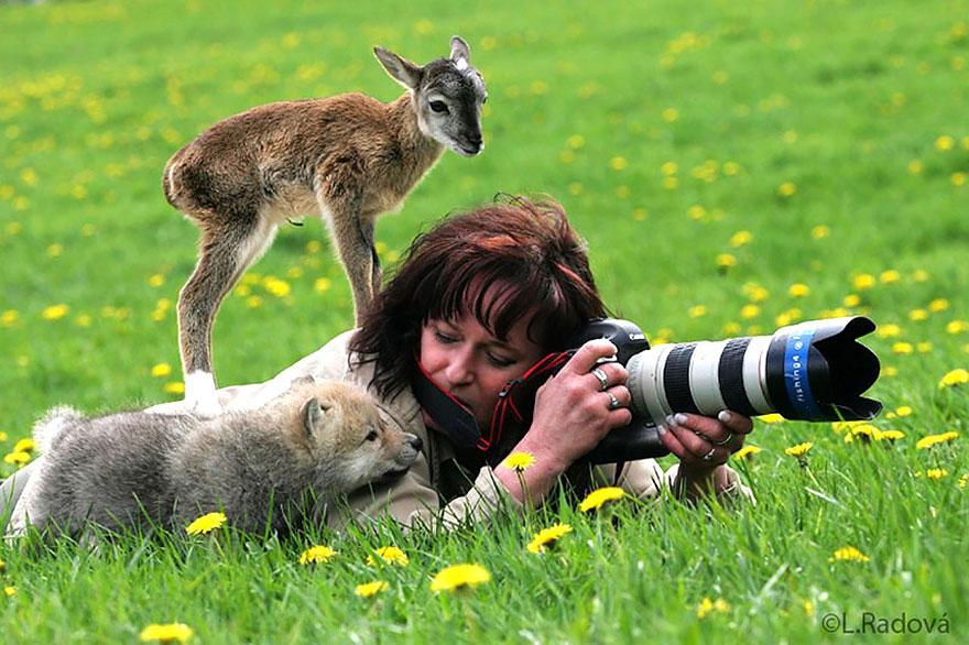 عکاس حیات وحش بودن بهترین شغل دنیا