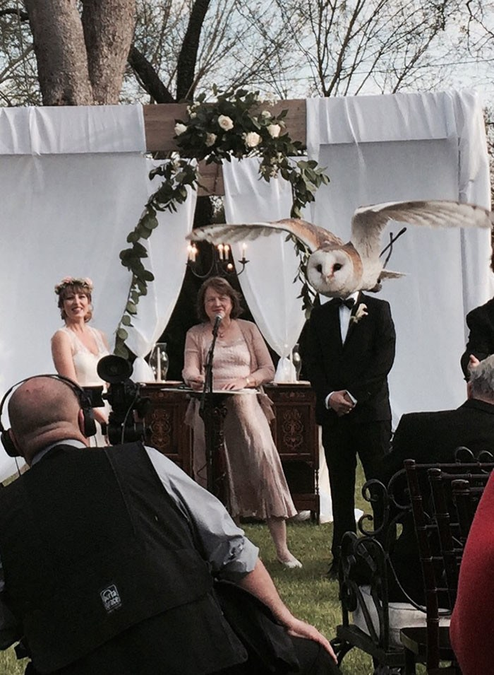 The-groom-turned-into-an-owl