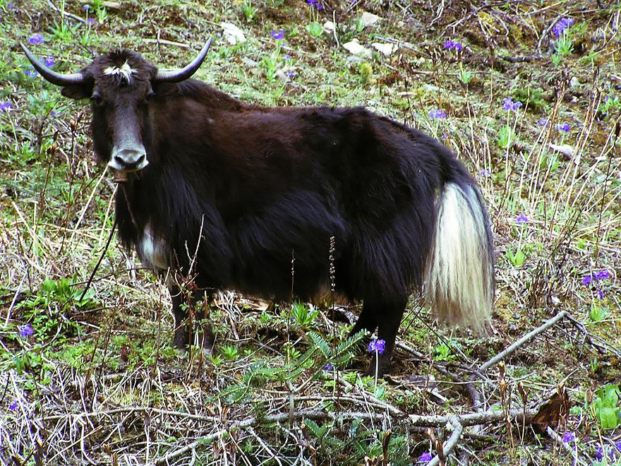 unusual-hybrid-animals-131