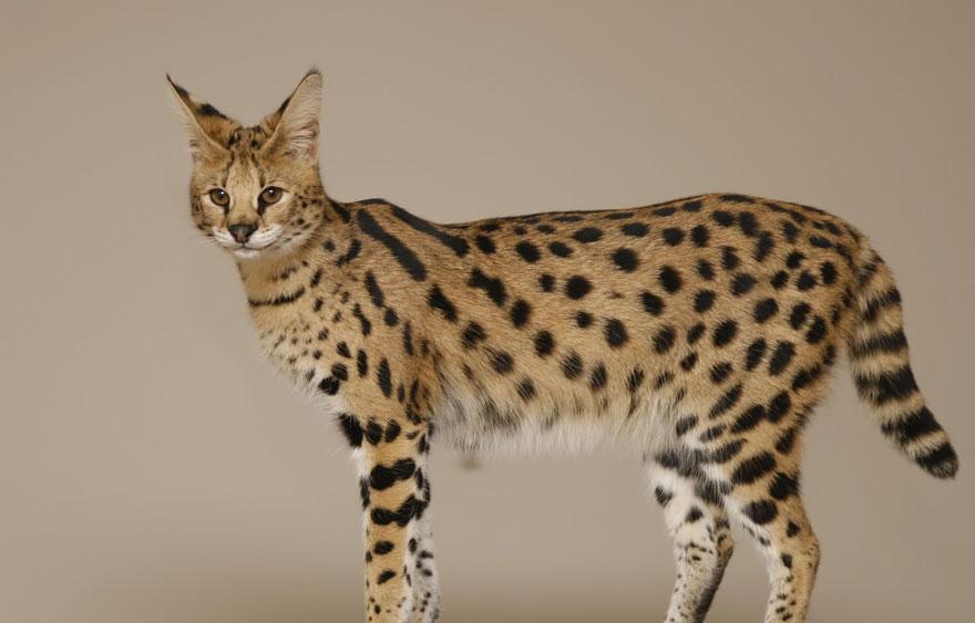 unusual-hybrid-animals-71