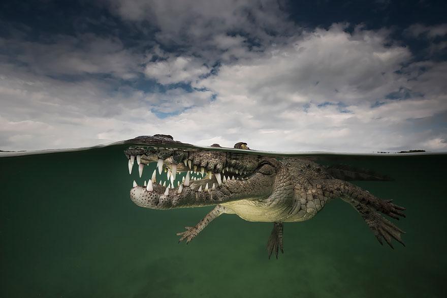 عکس های نفس گیر گرفته شده بین دو جهان