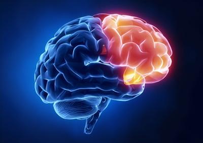 شگفتیهای پیچیدهترین دستگاه حال حاضر جهان؛ مغز انسان