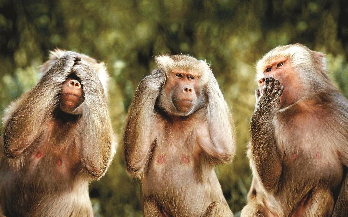 سالتون میمون !