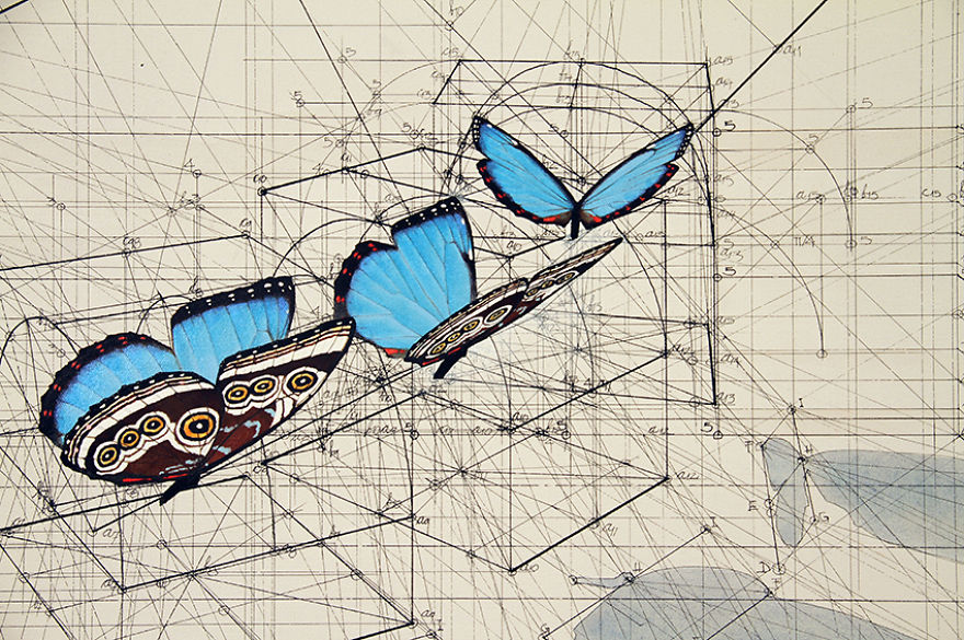 Architect-reveals-the-secret-of-natures-beautiful-designs-in-a-hand-drawn-coloring-book-56fbb56f33f4c__880
