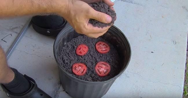 ساده ترین روش پرورش گوجه فرنگی در خانه