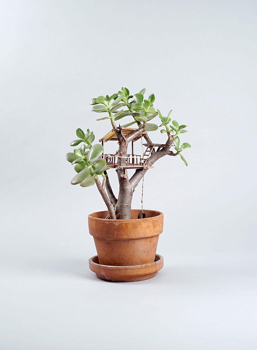miniature-treehouse-houseplants-somewhere-small-jedediah-corwyn-voltz-8