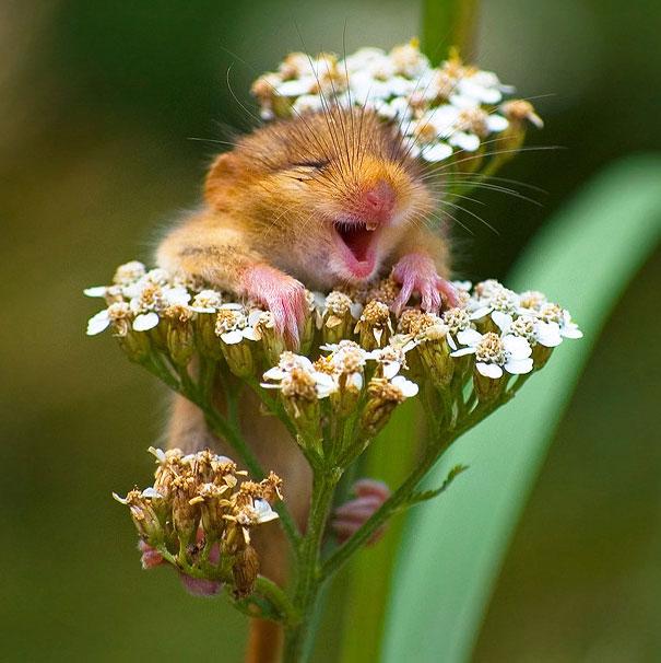 +۲۵ عکس از لبخند حیوانات که خنده را بر لبانتان می نشاند
