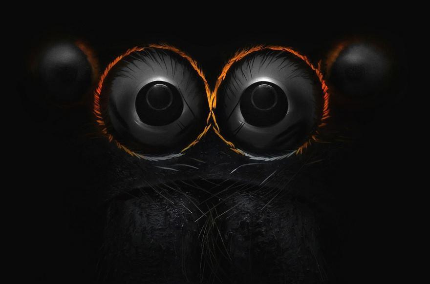 چشم یک عنکبوت جهنده