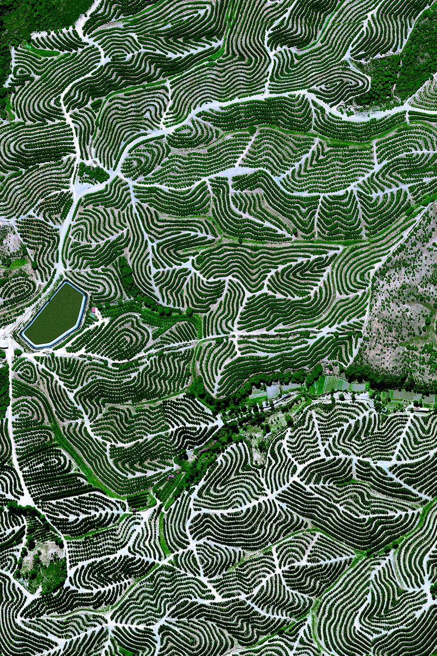 # 14 باغ های میوه، هوئلوا، اسپانیا