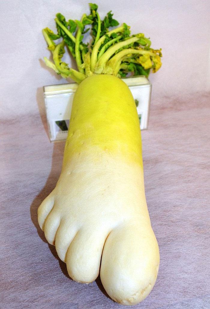 میوه و سبزیجات عجیب و غریب