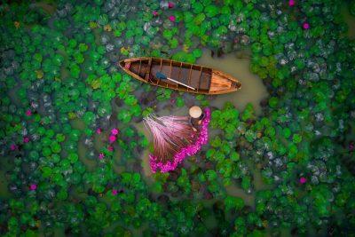 #1 Water Lily : یک زن در حال برداشتن نیلوفرهای آب در یک حوضچه در دلتای مکونگ در ویتنام.