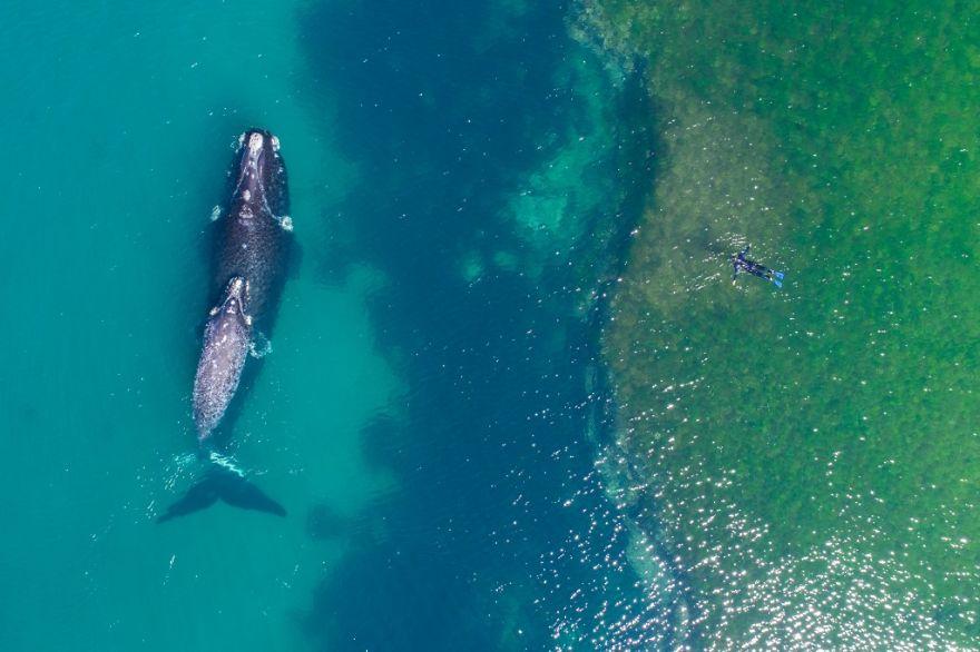 #4 Swimming With A Whale : شنا با یک نهنگ -دید هوایی از یک تجربه باور نکردنی.