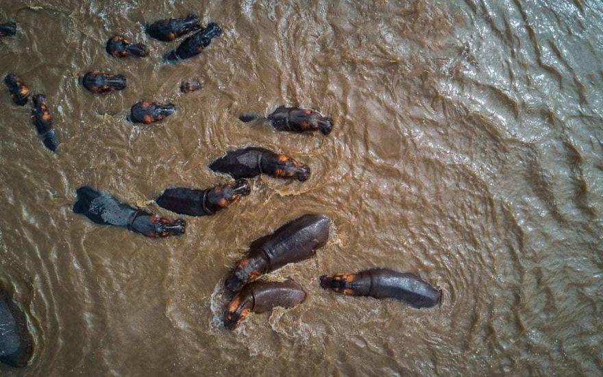 #17 Hippos : بیوپاتی در پارک ملی سرژنتی.
