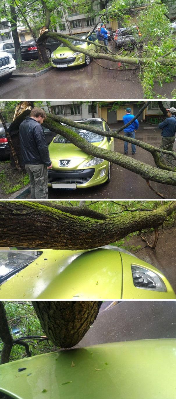 افتادن درخت روی ماشین پژو