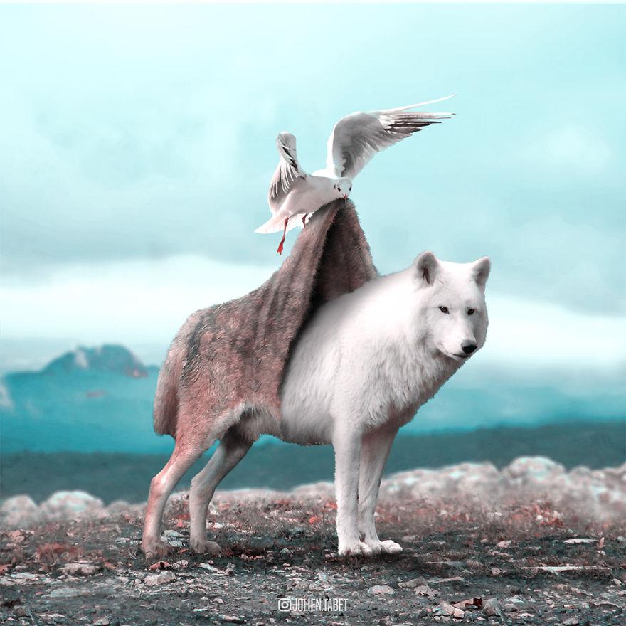 تصاویر سورئال از دنیای حیوانات (فوق العاده دیدنی)