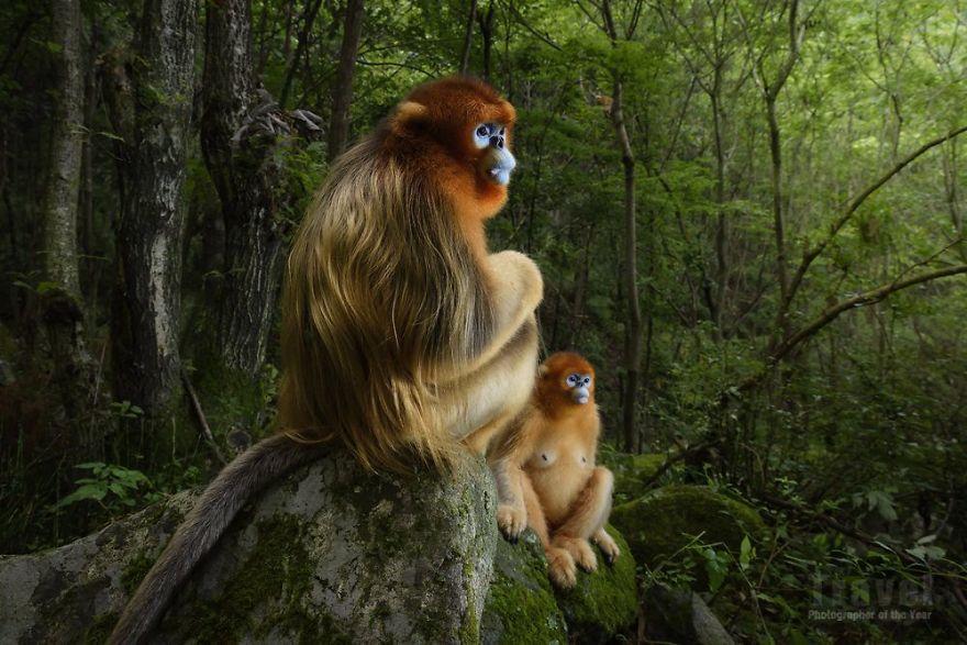 #19 Natural World - Highly Commended, Marsel Van Oosten, Netherlands