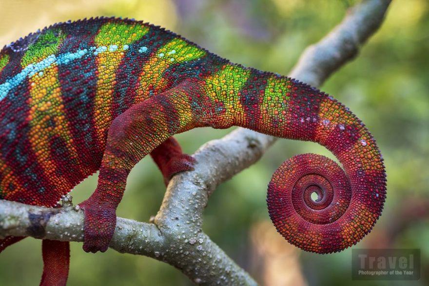 #6 Natural World - Commended, Ignacio Palacios, Spain