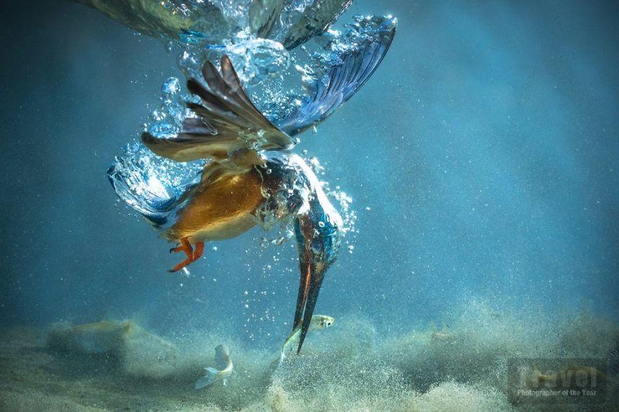 #15 Natural World, Special Mention, Petar Sabol, Croatia
